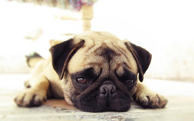愛犬の最期‥飼い主ができることとは?我が家の住職流の看取り方